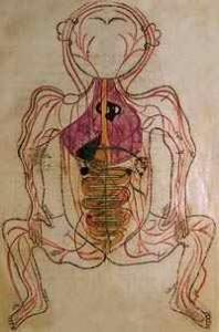 g-blood-circulation